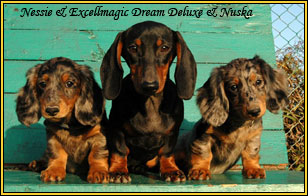 Dream and pups